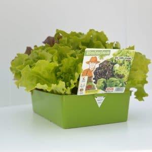 Salade x24