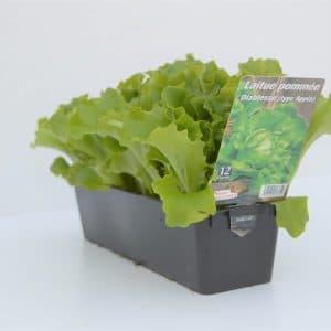 Salade x12