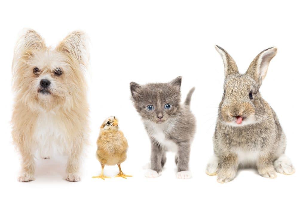 chien, oiseau, chat, lapin