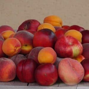 Scion Noyaux Racines nues (Prune/Pêche/Abricot)