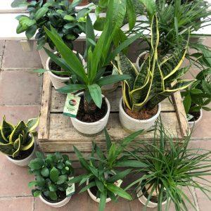 Plante verte – Différentes variétés